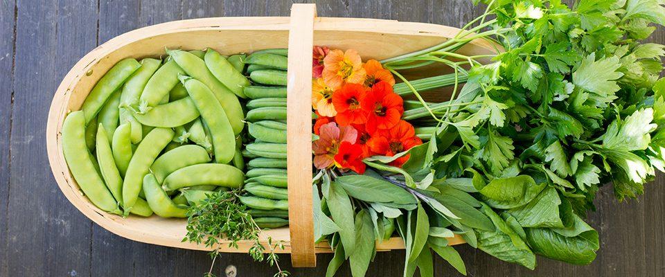 Spiselig - råvarer, stilkselleri, urter, sesong, lokal mat