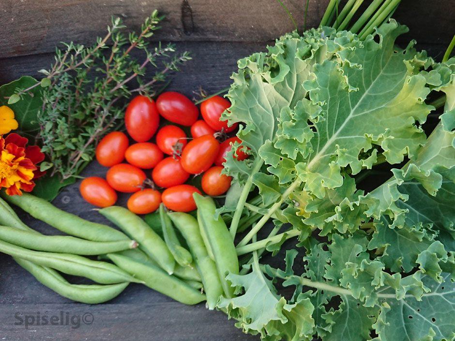 dyrk maten selv lag kjøkkenhage
